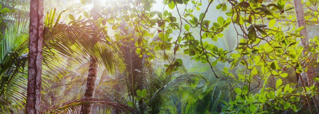 Lopoum National Park